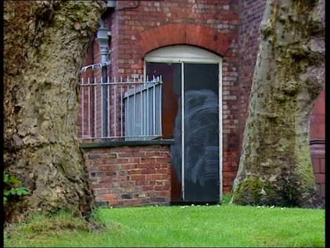 Paintings damaged ITN ENGLAND Manchester Fence PULL FOCUS bird along grass Whitworth Art Gallery seen thru hole in fence TRACK thru hole Trunk of...