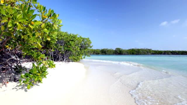HD - Mangrove beach