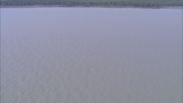 Mangrove forests grow on the banks of the Ganges River. Available in HD.