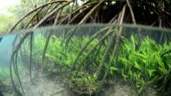 Mangrove root in Tha Pom, Krabi, unseen Thailand