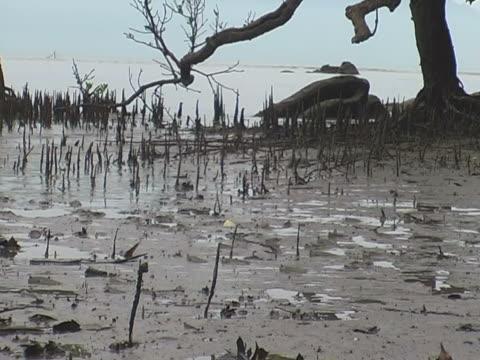 Mangroven zu finden