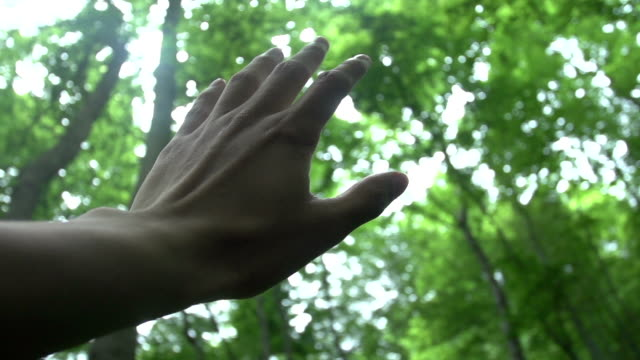 Man's hand in back light in forest