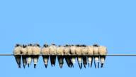 Viele Vögel fliegen zur Wire