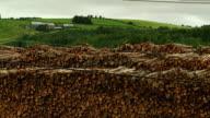 Many stacked tree trunks