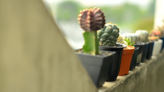many types of cactus is on the edge