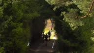 Marathon through the forest