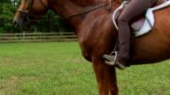 Marcia's Stubborn Horse
