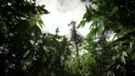 Marijuana plants backlit by sun