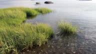 Marsh on the shore line