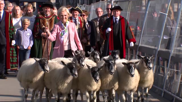 Mary Berry drives sheep over London Bridge ENGLAND London London Bridge EXT Various of cook Mary Berry driving sheep over London Bridge an honour...