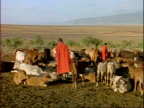 MS Masai tribesmen tending cattle on rift valley floor, Tanzania