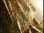 Mass of locusts on wire netting Nairobi