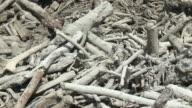 Massive pile of logs covered in mud in river after major landslide