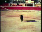 1953 WS PAN Matador fighting with the bull in bullring, Audience cheering / Pamplona, Madrid, Spain / AUDIO