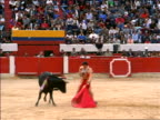 Matador with red cape provoking bull with banderillas in neck / Bogota, Colombia