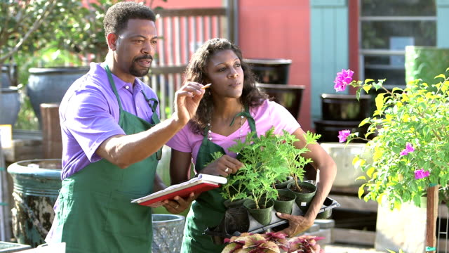 Mature black couple working in plant nursery