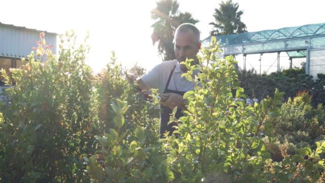 Mature man gardener shaping the plants at garden center