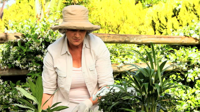 Mature woman gardening / Cape Town, Western Cape, South Africa