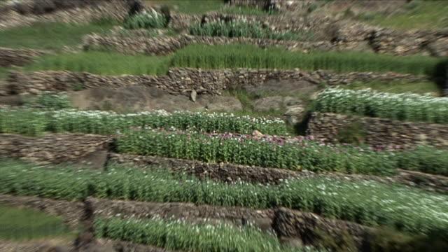 May 1 2009 WS HA ZO Flowers in plantation / Najil Afghanistan