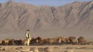 May 1 2009 WS Herder guiding sheep / Bagram Afghanistan