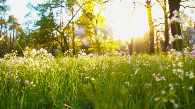 SLO MO Meadow in springtime