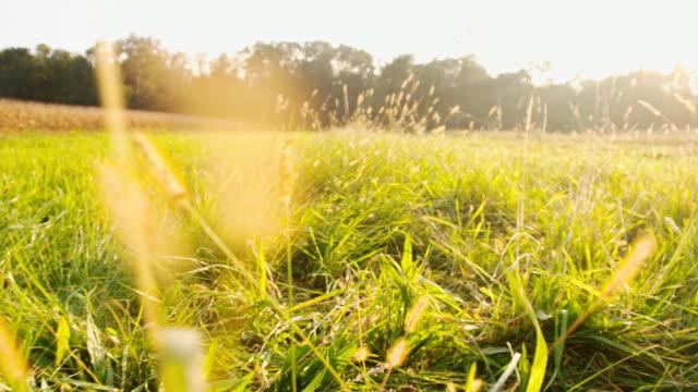SLO MO Meadow In The Sun