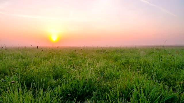 WS CS Meadow In The Sunrise