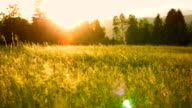 SLO MO Meadow In The Sunset