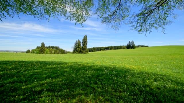 Meadow landscape in spring, Allgau, Bavaria, Germany