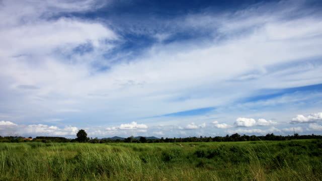 Meadow of agricultural area in the rural on fine weather day.
