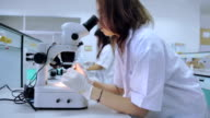 Medical students using a microscope to see bacteria,Dolly Shot