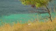 CU ZO WS PAN Mediterranean coast / Dalmatian Islands, Croatia