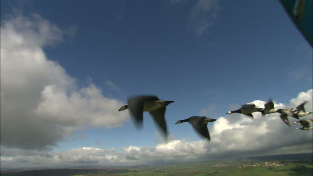 Medium aerial - Geese fly in formation with an ultra light aircraft / France