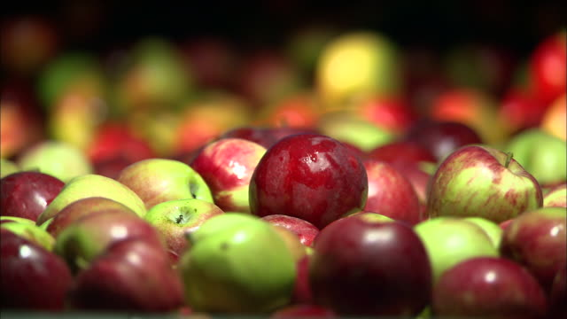 Medium Close Up static - Apples roll off a ledge as other apples drop onto a piece of machinery /  Missouri, United States