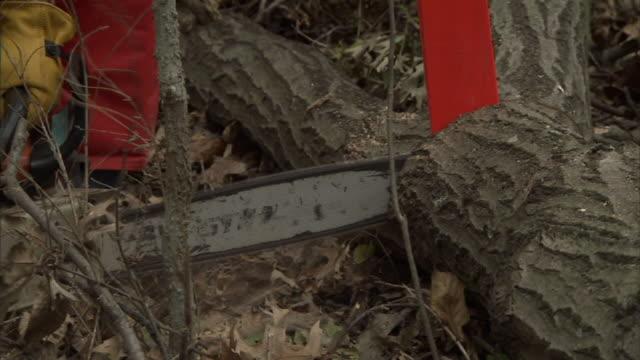 Medium hand-held - A chainsaw cuts into a fallen tree. / Missouri, USA