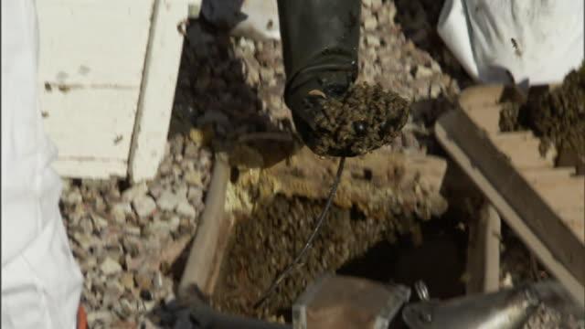 Medium hand-held pan-left pan-right tilt-up - Beekeepers relocate an infestation of killer bees. / Arizona, USA