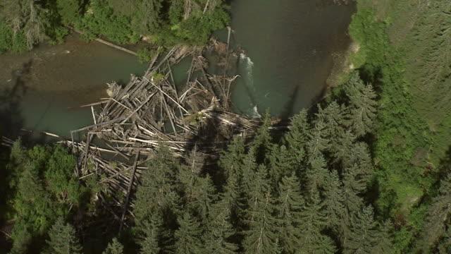 'Medium Long Shot aerial pan-right push-in-Woody debris forms a log jam in a river. / Alaska, USA'