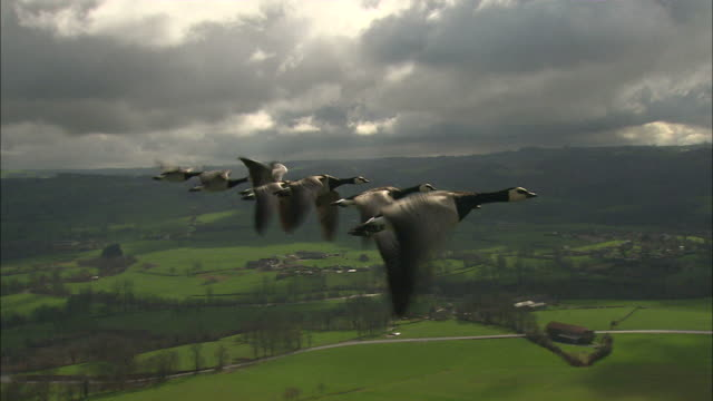 Medium Long Shot aerial steadicam tracking-right - Geese fly in formation over a rural area / France