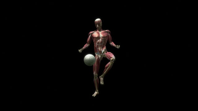 Medium Long Shot static - A computer animation shows the muscular system of a human body kicking a ball