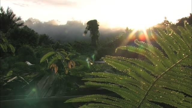 Medium Long Shot static - Sunlight shines on tropical vegetation in the Indonesian jungle. / Indonesia