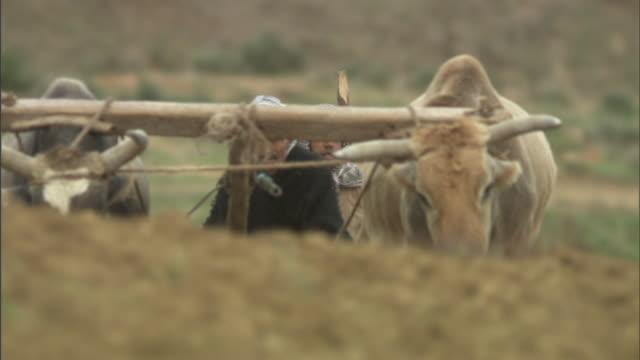 Medium Long Shot tilt-up - A farmer follows behind oxen plowing a field. / Tunisia