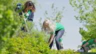 Medium low angle view of volunteers digging with shovels / Cedar Hills, Utah, United States