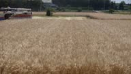 Medium shot a farmer harvests wheat with an Iseki Co combine harvester Wide shot a farmer harvests wheat with a Yanmar Co combine harvester in...