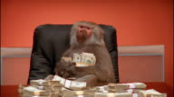 Medium shot baboon holding stacks of money and making faces