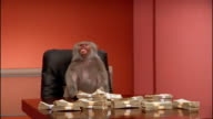 Medium shot baboon holding stacks of money and making noise