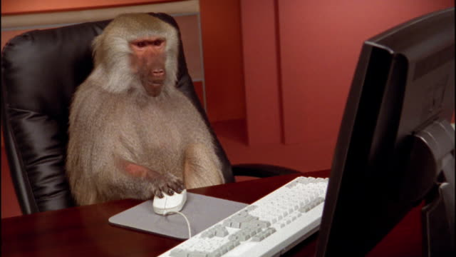 Medium shot baboon moving computer mouse