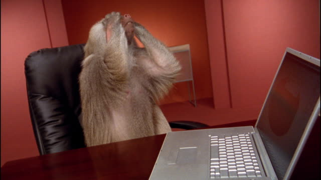 Medium shot baboon pounding on laptop keyboard