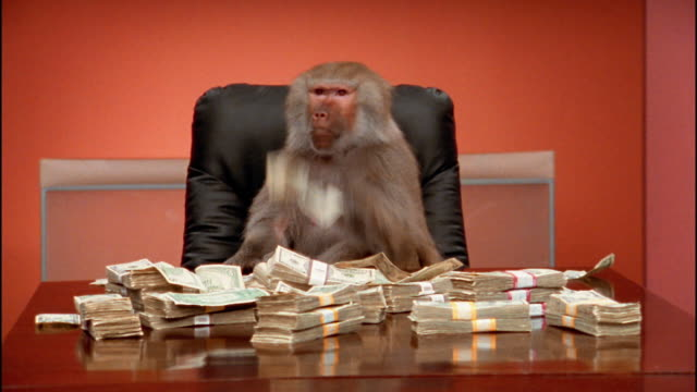 Medium shot baboon throwing cash around / stacks of money in foreground