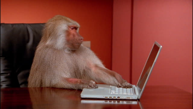 Medium shot baboon typing on laptop