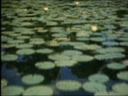 1985 medium shot canoe point of view moving through lily pad-covered pond